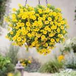 calita yellow